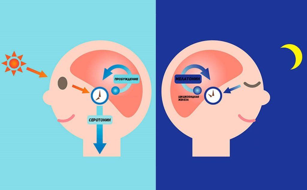 Мелатонин: применение, польза для организма, как принимать